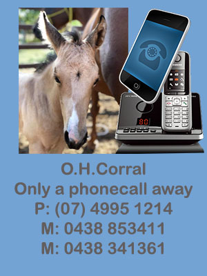O H Corral - horses for sale Thangool. Contact Pat and Liz O'Halloran